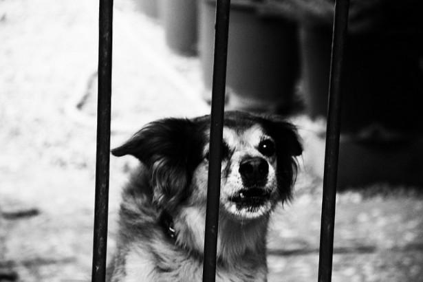 台灣出現首起犬隻感染狂犬病 學者:幼犬快去打疫苗