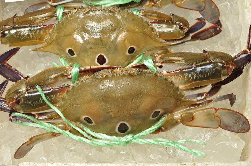 紅星梭子蟹(三點仔)圖:台灣魚類資料庫