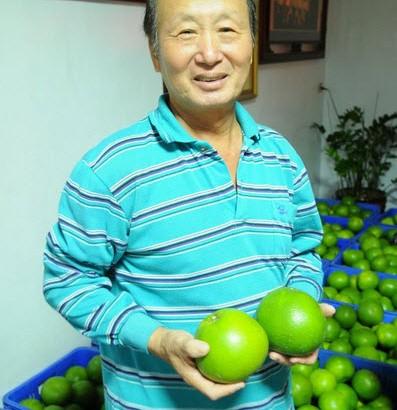 花蓮有機農業前輩曾爺爺的葡萄蜜柚