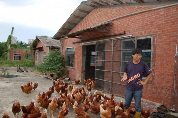 養雞也可以很Free Style。Yo Yo~ Go Go~
