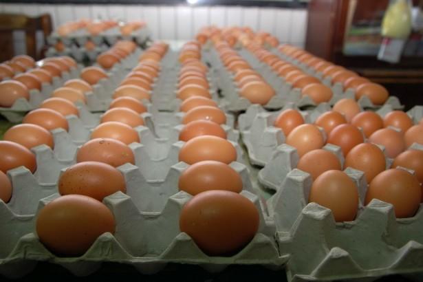 養雞也可以很Free Style。怎麼選蛋呢?