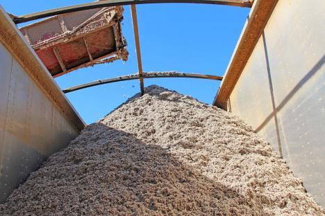 農委會清查近3年進口棉籽粕 初步結果未外流