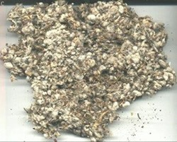 cotton_seed_waste