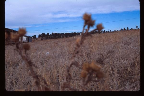 除草劑用量創5年新高 非農地濫用嚴重