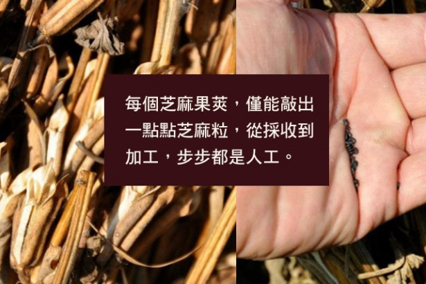 農委會加碼補助胡麻(芝麻) 農民:健全採收加工制度更重要