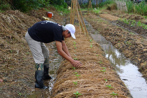 江映德和「兩佰甲」成員在深溝國小種菜,希望能補足在地食材