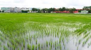 農地消失後,保證高雄淹水一定更加嚴重。(圖/袁庭堯攝)