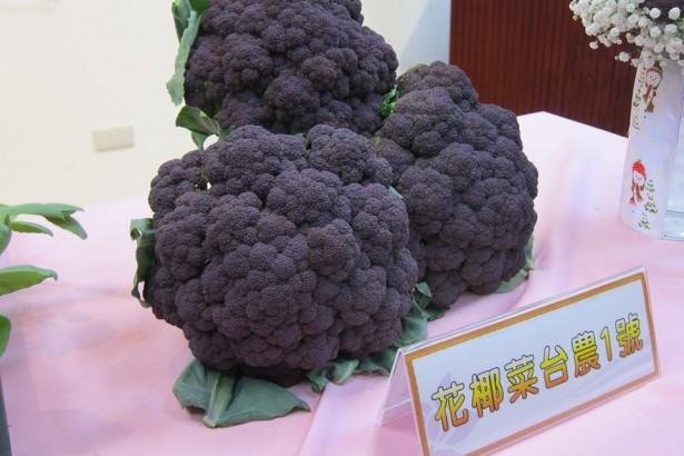 歷經33年努力,農試所推出紫色花椰菜「台農1號」