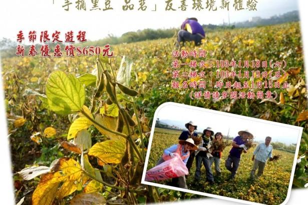 【公民寫手】【季節限定】手摘黑豆,品茗友善環境新體驗