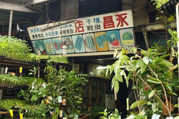 【公民寫手】玫瑰鸚鵡遊台灣(4)東市場走讀