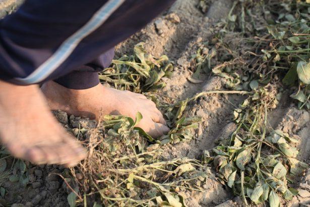 (2014)政院推自經區,國外農業原料加工掛MIT,學者:農業一年將減少1739億產值