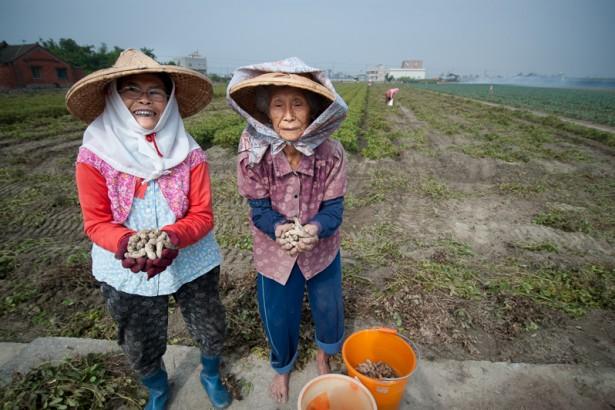 自經區政策開放,中國便宜花生製作花生醬掛MIT,恐重創台灣花生產業