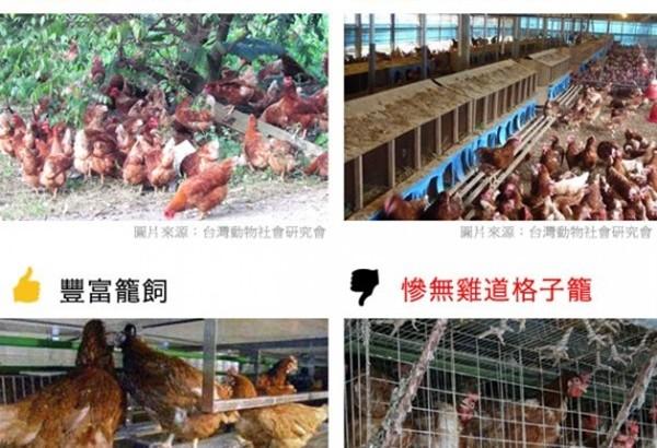邀請民眾吃好蛋,農委會公布友善雞蛋生產指南