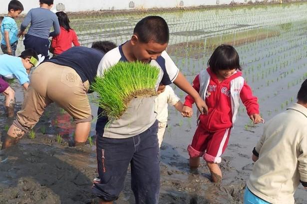 屏東大明國小的食農教育 孩子吃自己種的米