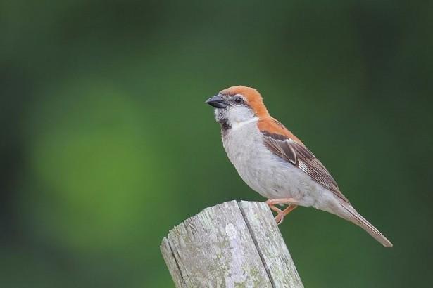 公民科學家數鳥,17萬隻創歷年新高