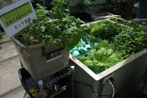 魚菜共生系統 都市家戶自給自足的農耕法
