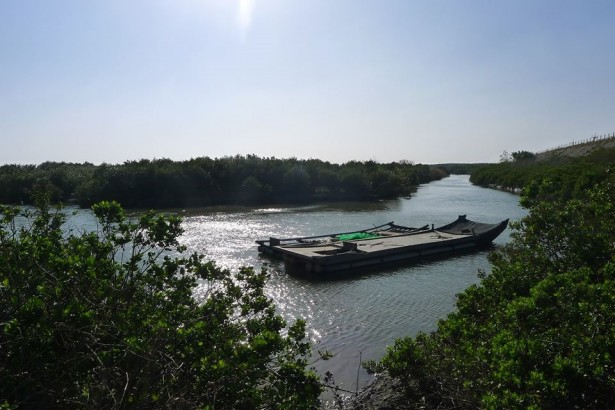 從地層下陷到漁鹽農村串連,嘉義沿海的重生之旅