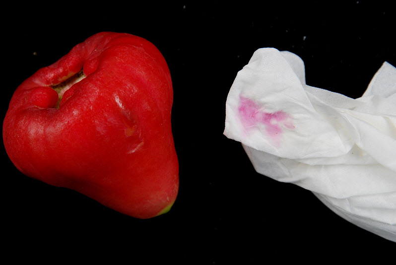 新鮮蓮霧不需要經過人工上色,用衛生紙磨擦就可以擦出自然的花青素。