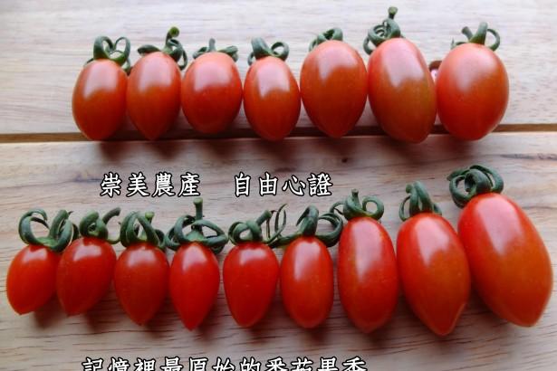 今天我找回了記憶裡最原始的番茄果香!