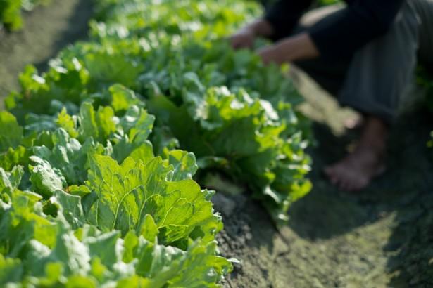 宜蘭營養午餐缺有機蔬菜 期待更多有機小農投入生產