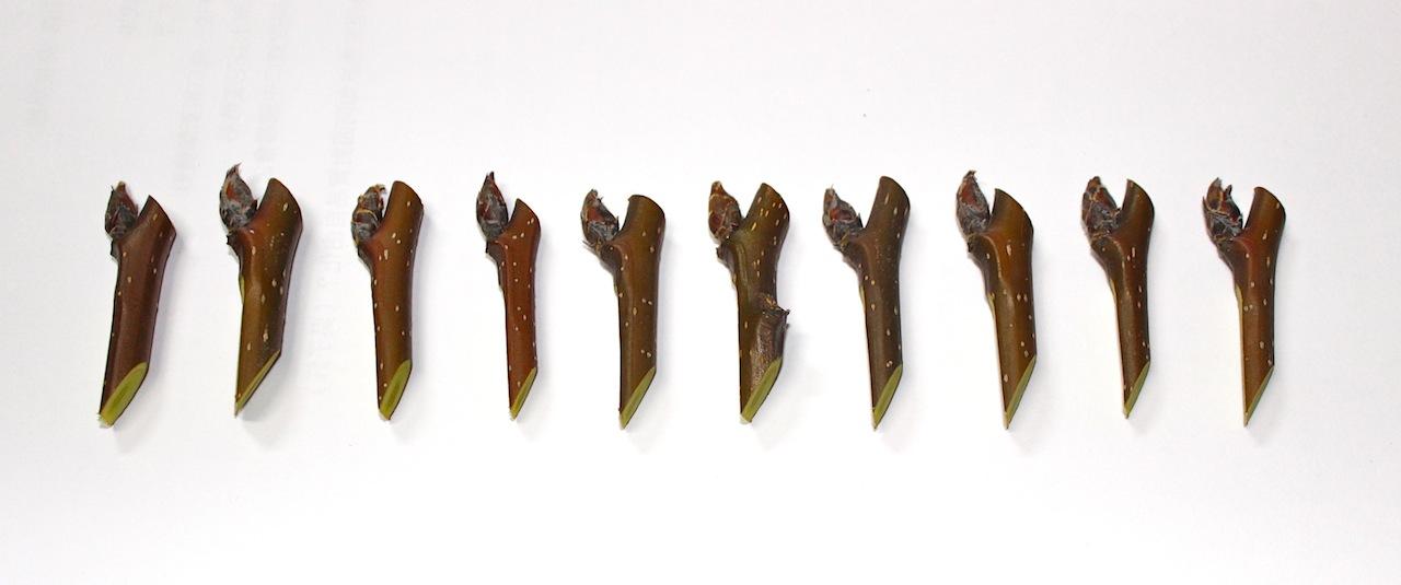 昌楙大哥削好的花苞,好像工廠量產的
