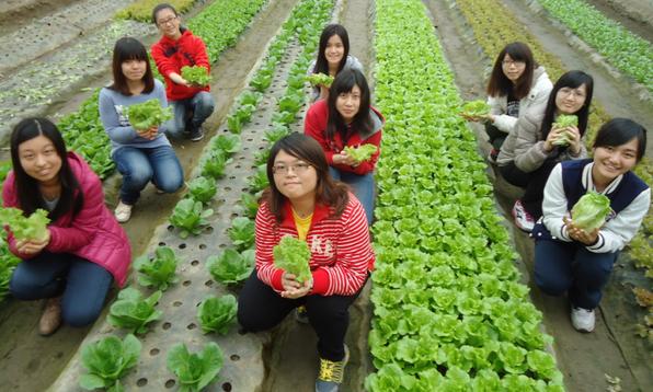 【公民寫手】你知道怎麼種出又大又美的青菜嗎?