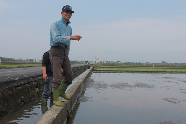 年輕學子勇承擔 結合老農 以生態水田打造鳥類天堂