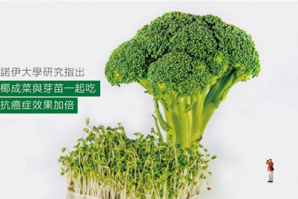 【公民寫手】1+1大於2,青花椰苗跟青花椰菜一起吃最好