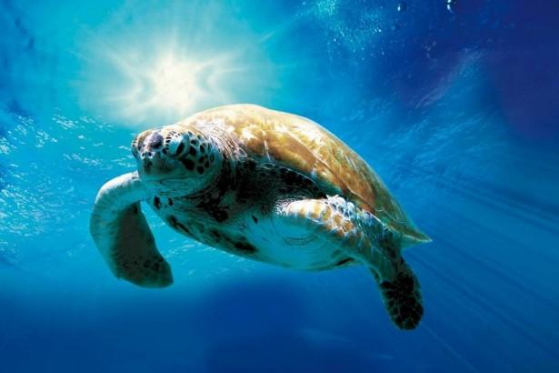 【520我愛你,523我愛龜】海龜影展,等你來飛翔