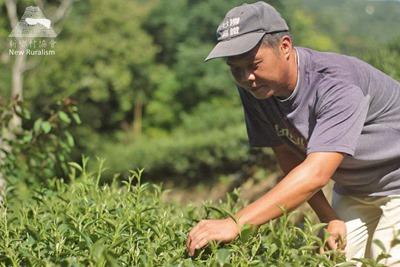 新鄉村協會_茶農