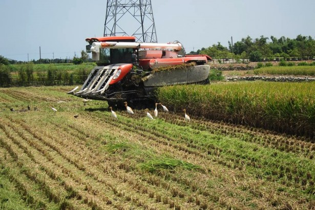 公糧拒收再生稻 中市補貼一萬二 農民難抉擇