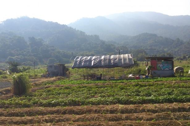 【公民寫手】【香港通信】從城市走進農田