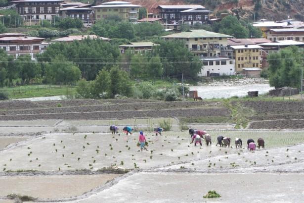家庭農業與糧食自主─幸福不丹的觀察與省思