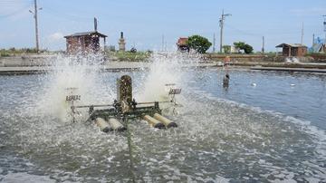 利用水車 造成循環 不僅增氧 也將池底髒污聚集到中央排污口