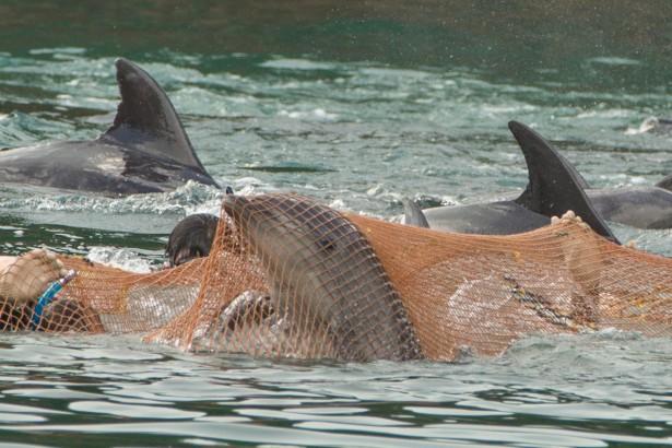 【公民寫手】觀賞鯨豚表演=助長海洋殺戮 動保與海洋保育團體齊籲拒看