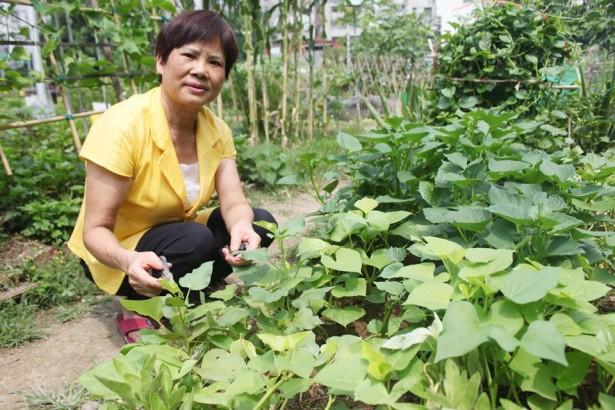 【公民寫手】松山「幸福農場」寸土寸金 「都市農耕網」籲政策支持並擴大