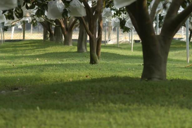 以雜草管理保護土壤 覆蓋作物育種研究待重視