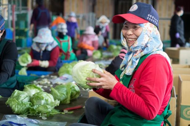 農村缺工系列報導(5)農業外勞政策有疑慮,農友提建議