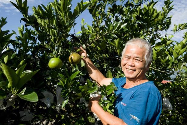 【公民寫手】農夫朋友-施明德的無農藥綠皮甜葡萄柚! 即日起開始預購,季節限定,售完為止。