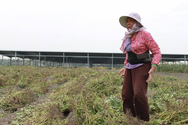 變相的綠電 實質的農地掠奪 農地種電肥了誰?