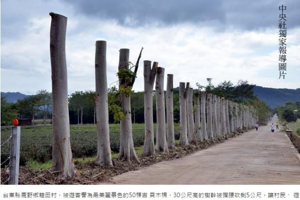 防止樹斷頭事件再度發生 農委會擬訂《樹保法》修樹要有證照