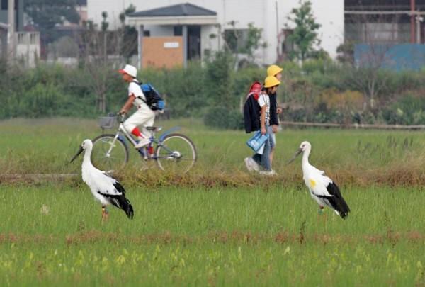 【公民寫手】日本見學後記─台日校園食育大不同 | 上下游News&Market