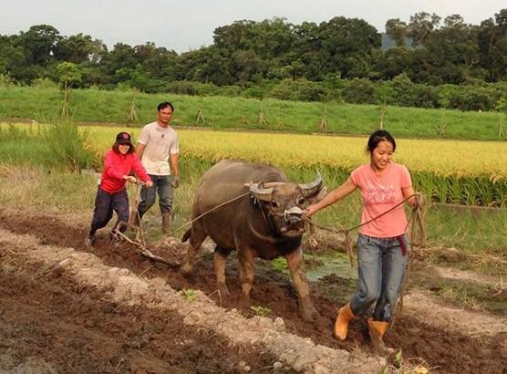 【公民寫手】【大牧童、小牧童一起放牛吃草吧!!】
