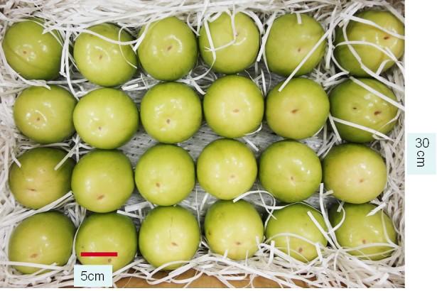 大突破,蜜棗明年可望首度外銷日本 農友呼籲重視種苗外流中國問題