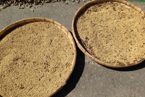 【公民寫手】自然農法黃豆(花蓮一號/非基改),季節限量,售完為止