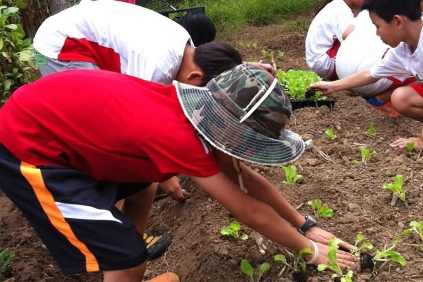 【公民寫手】食農教育:陽明山與湖山國小的小農夫學習體驗