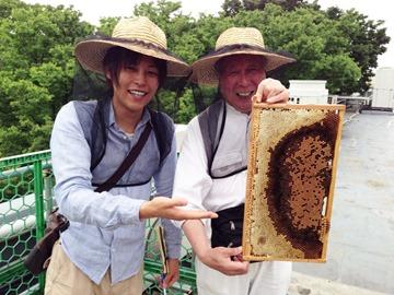 拜訪東京的蜂農