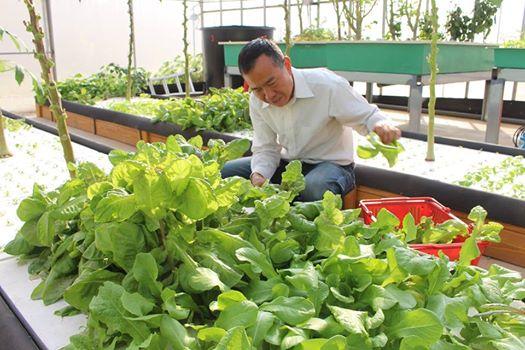 【公民寫手】魚菜共生常見問題-魚菜共生專家陳登陽答覆