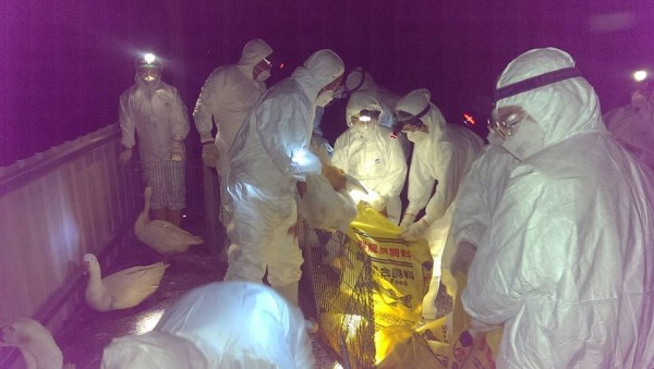 台灣新型禽流感病毒是否有傳染人的能力?防檢局應速公開8段基因資訊釋疑