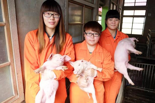 農校系列(4)台灣版《銀之匙》西螺農工畜保科實作能力強 面臨不公平升學窄門